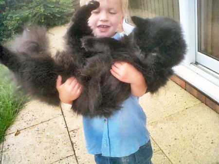 Small girl holding a very large black cat.