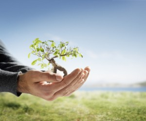 Ecological Tips, Hands Holding Small Tree