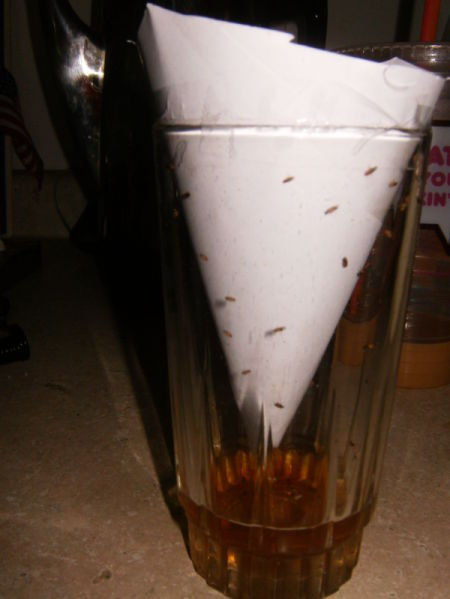 Paper funnel down inside of drinking glass. Trapped gnats visible in the glass.