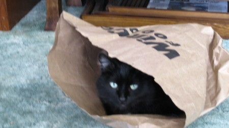 Hoku the Cat in Paper Bag