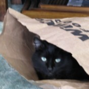 Hoku the Cat in Paper Bag