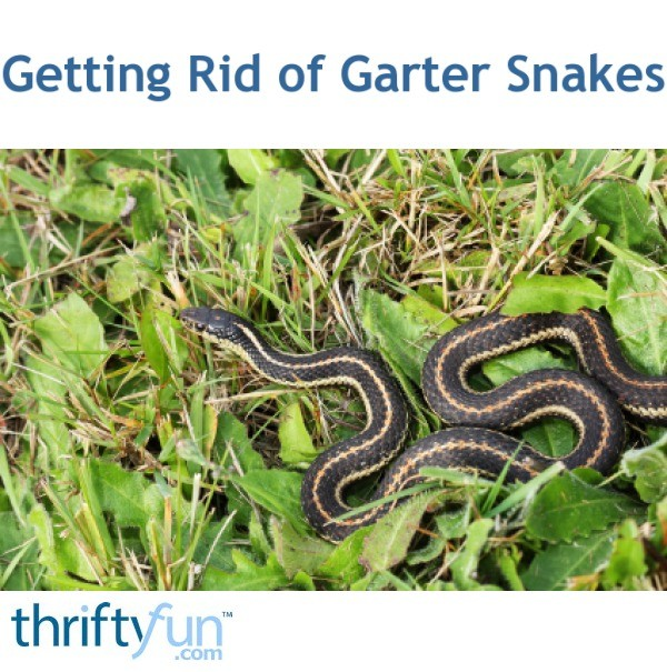 How to Get Rid of Garter Snakes | ThriftyFun