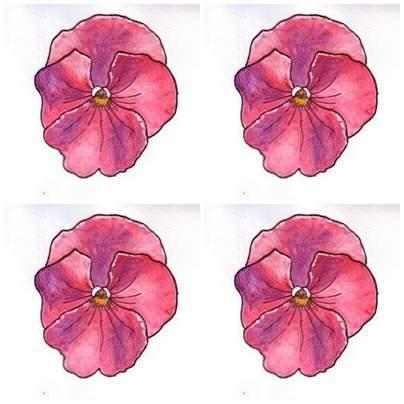 Pink Pansies Drawing