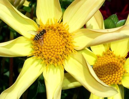 Large Yellow Sunburst Flower
