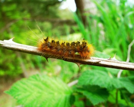 Caterpillar crawling on a branch.