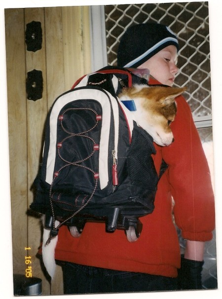 Saint the Dog in a Backpack