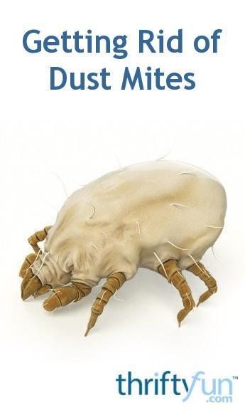 Getting Rid Of Dust Mites Thriftyfun