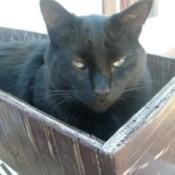 Bombay Amos in Planter Box