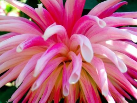 Closeup of Pink Tube Blossom