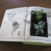 Thick book laid open, center of pages cut out filled with dirt and some succulent plants.