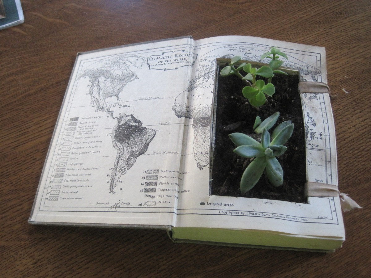 Succulent Planter Crafts | ThriftyFun