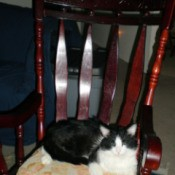 Miss Kitty in a Rocking Chair