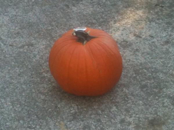Pumpkin Planters - Uncut Pumpkin
