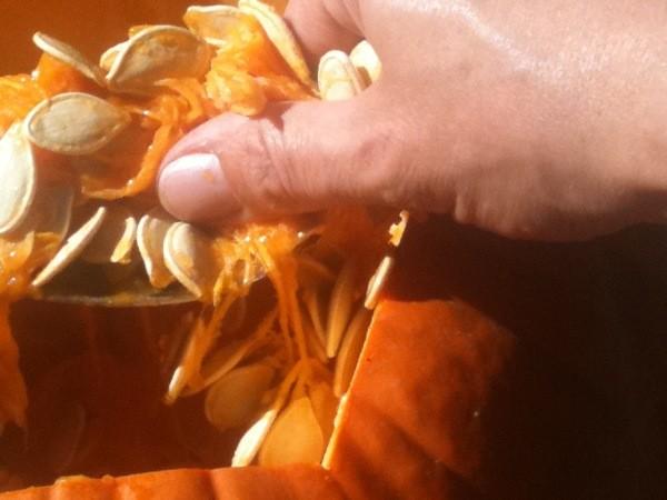 Pumpkin Planters - Removing seeds from pumpkin