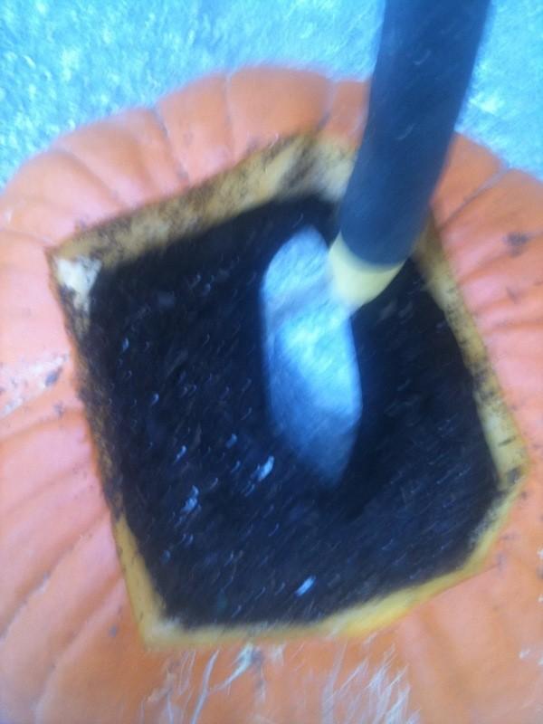Pumpkin Planters - Pumpkin planter filled with soil