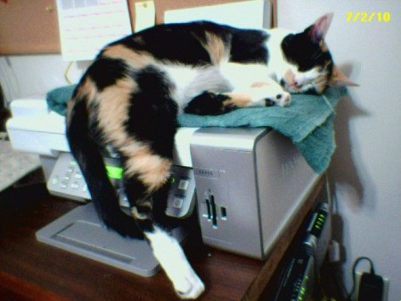 Cat Laying on Fax Machine