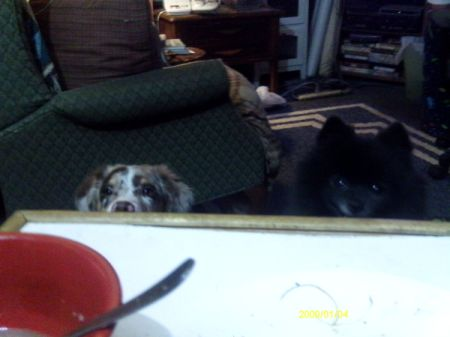 SayD the Dog Peaking Over Table Edge