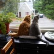 Karma and Numi Bird Watching