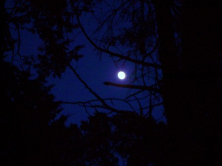 Moon Glowing Through Trees
