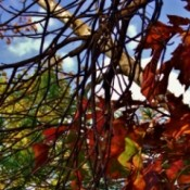Autumn Colors through tree branches.