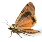 An up close photo of a moth.