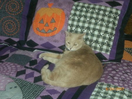 Miss Chloe the Cat Laying by Halloween Pillow