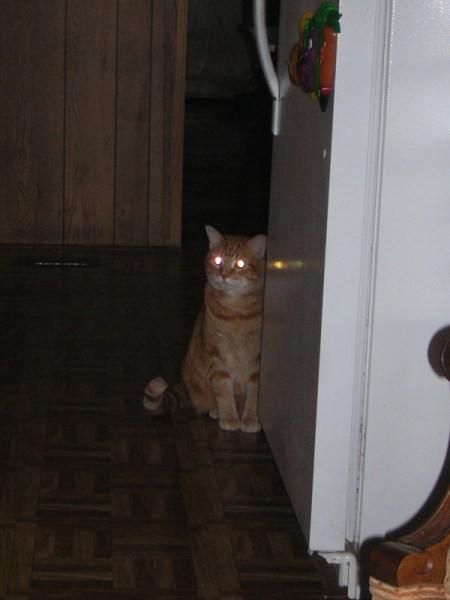 Fry the Cat Sitting on Kitchen Floor