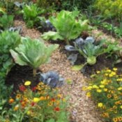 Mixed veggie and flower garden with gravel paths.