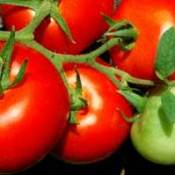 Photo of tomatoes.