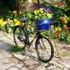 Flowers Planted in Bicycle Basket