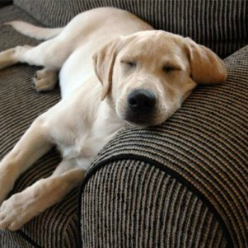 Dog sleeping on a couch.