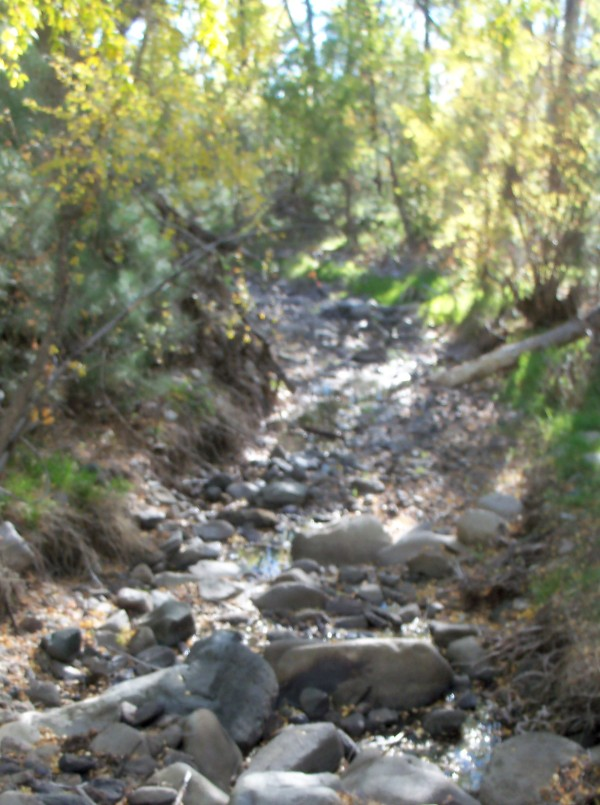 Stream in White Mountain Wilderness