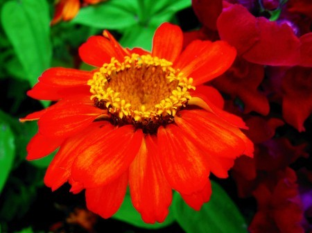 Large Bright Orange Flower