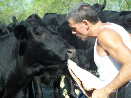 Man with Black Cattle