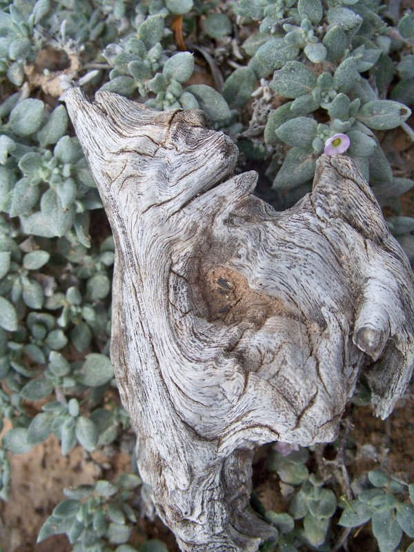 Gnarled wood on succulents.