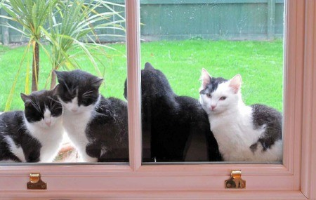 Fours Cats on the Outside of Window Sill