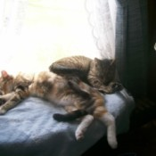 Pepper and Ginger the Cats Sleeping