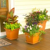 Container planters on a porch.