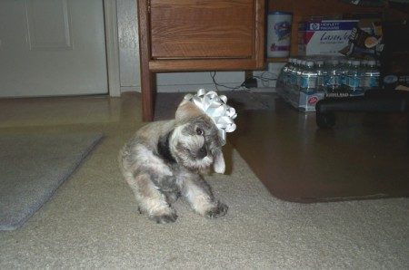 Molly the Dog with a Bow on Her Head