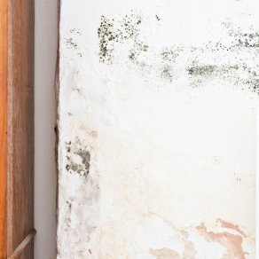 How To Get Rid Of Black Mold On Walls getting rid of black mold | thriftyfun
