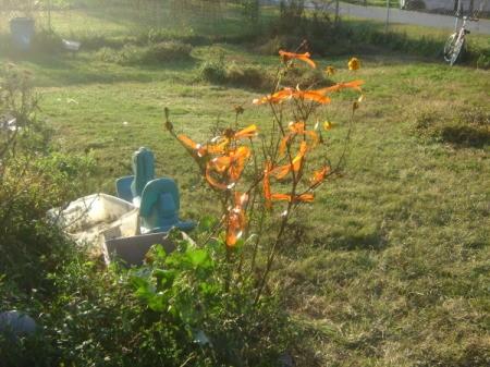 Orange Ribbon Tied to a Bush