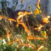 Closeup of Orange Ribbon Tied to Bush