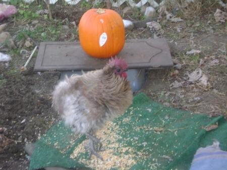 Phoenix With a Pumpkin in Pen