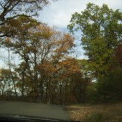 View of Fall Trees from Inside Vehicle