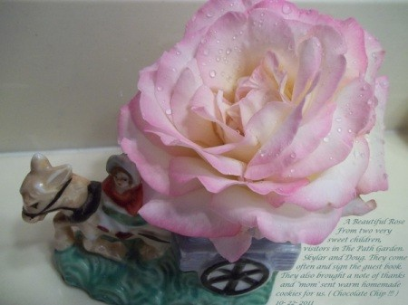 Pink Rose in Small Container