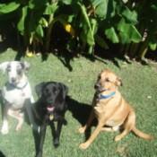 Three Dogs Sitting on Grass