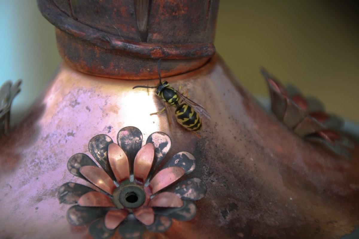 Keeping Bees Out of a Hummingbird Feeder | ThriftyFun