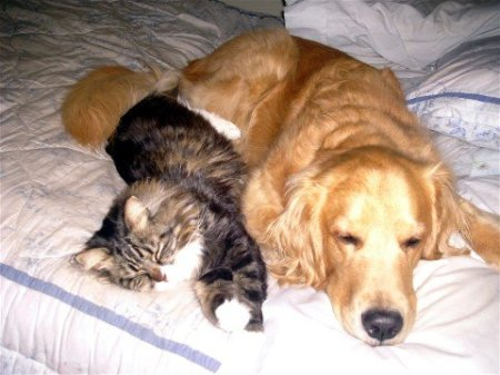 Oliver and Oscar, Dog and Cat, Laying on the Bed Together