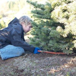 Boy Cutting Christmas Tree