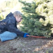 Boy Cutting Christmas Tree